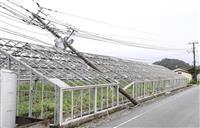 NTT東、千葉県内の通信ケーブルや電柱の破損を9月末に復旧へ