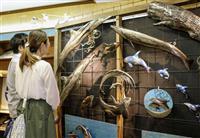 クジラ好き作家と交流 和歌山・太地町の博物館
