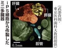 iPSでミニ多臓器を作製 東京医科歯科大が世界初