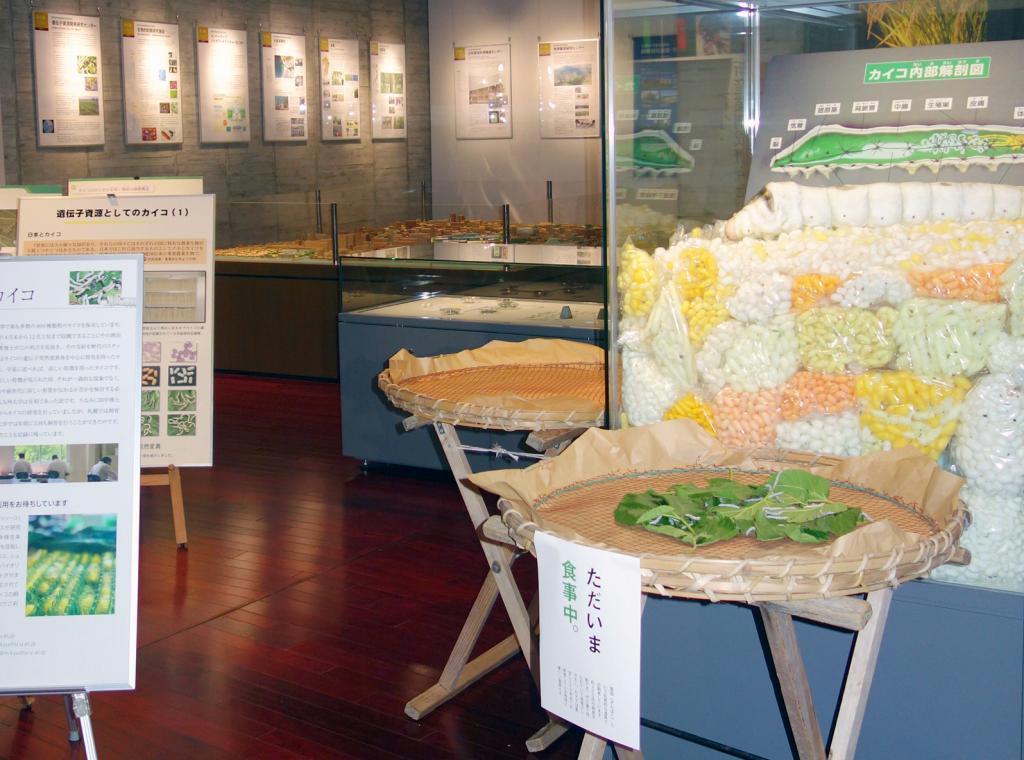 100年の研究実績を紹介した「農学部百年の至宝展」