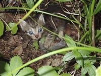 ネコ繁殖、希少種を捕食 奄美大島の世界遺産推薦地