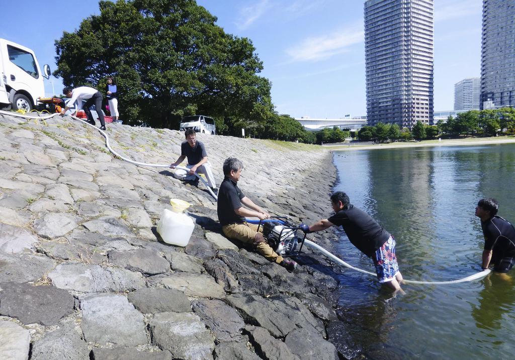 お台場で水質改善実験 トライアスロン日本選手権前に - 産経 ...