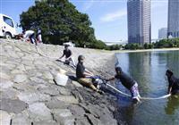 お台場で水質改善実験 トライアスロン日本選手権前に
