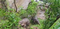 ゾウ6頭、滝に落ち死ぬ タイ国立公園