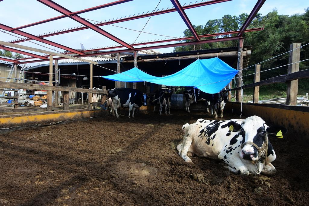 台風15号の強風で屋根が大きくめくれ上がった牛舎。応急処置の工事が進められている=8日、千葉県多古町(城之内和義撮影)