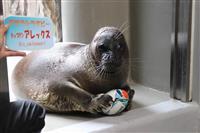 アザラシがラグビーW杯を応援 仙台うみの杜水族館