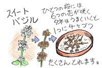 【多田欣也のガーデニングレッスン】(45)バジルの種を取りましょう