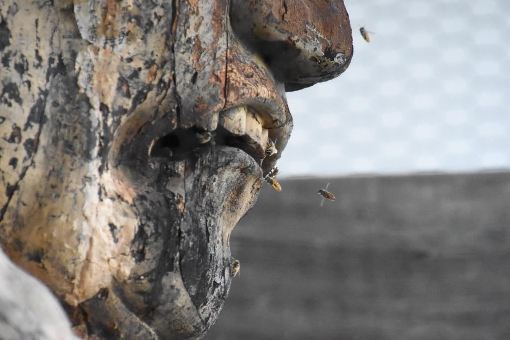 仁王像の阿形像頭部周辺を飛び回るミツバチ=奈良県葛城市の当麻寺