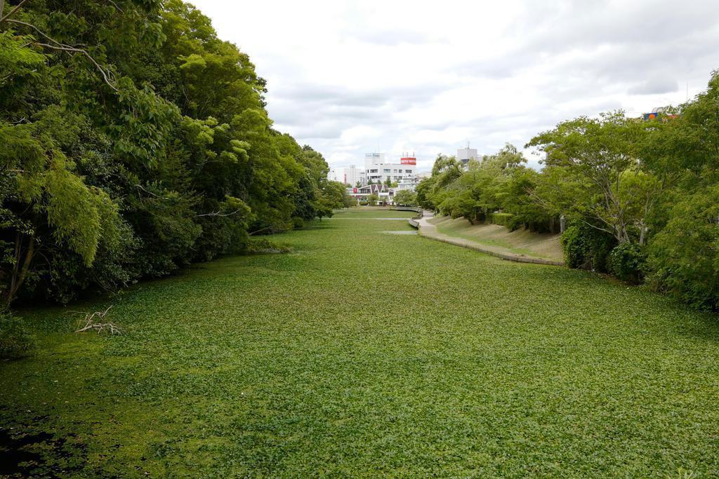 亀山城北側に残る水堀(筆者撮影)