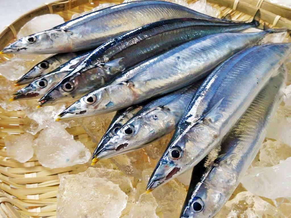 福島県の「小名浜の秋刀魚」(全国漁業協同組合連合会提供)
