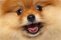 その男は、かくして「頼まれてもいない犬の写真」を人々に送り続ける