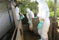 埼玉の養豚場で殺処分開始 県3例目、2千頭対象