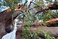 【台風19号】樹齢1000年、国天然記念物のケヤキ折れる 山梨
