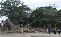 【台風19号】いまも家に水、泥と倒木だらけの公園 東京・世田谷
