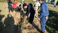 【台風19号】畑を覆う一面の稲わら 収穫直前の大豆は絶望