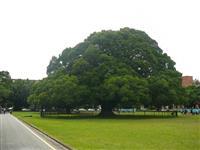 台湾、即位の礼祝う 昭和天皇ゆかりの植物里帰りへ 途絶えている皇族訪台再開に期待