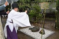 千葉・野田では力石をお披露目 即位礼に合わせ