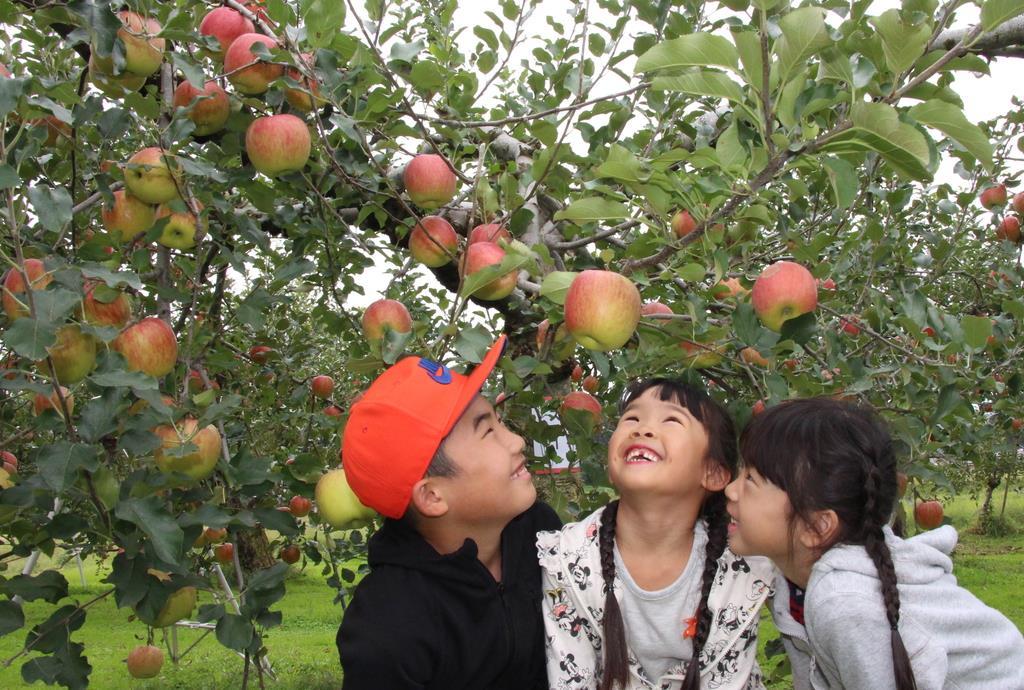 【台風19号】被害免れ実りの秋 栃木でリンゴ収穫最盛期、赤ト…