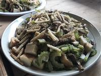 意外においしいセミ、カメムシ…昆虫食は食糧危機を救う?