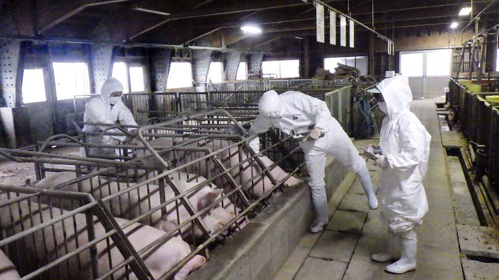 豚 コレラ 三重