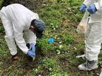 群馬・豚コレラ対策 野生イノシシ向け経口ワクチン 摂取は6割か