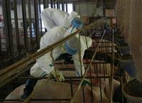 群馬県、豚コレラワクチン接種開始 60万頭対象、初回は5200頭