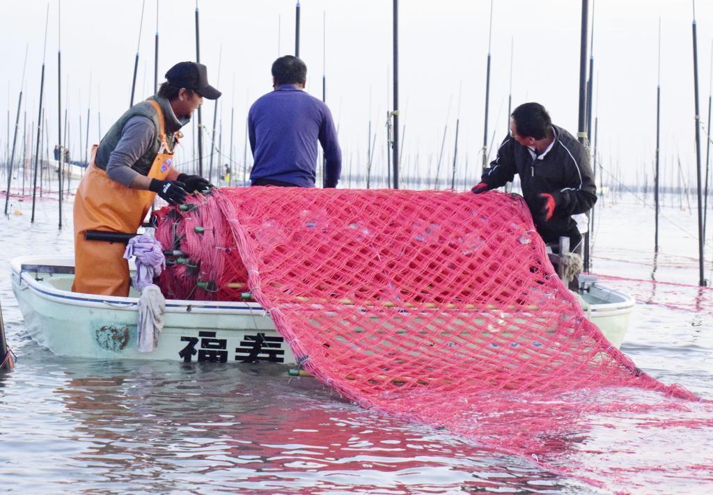有明海で始まった養殖ノリの種付け作業=27日朝、佐賀市沖