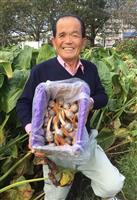 饗宴の儀にクワイ献上、駒崎昌紀さん「役に立てて幸せ」
