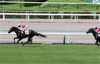日本馬フルフラットは5着 米国競馬ブリーダーズC