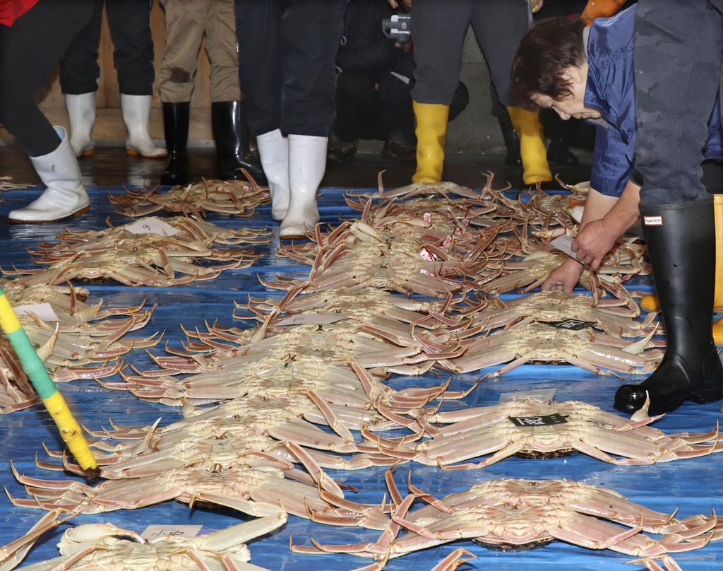 鳥取市の鳥取港で開かれたズワイガニの初競り=7日午前