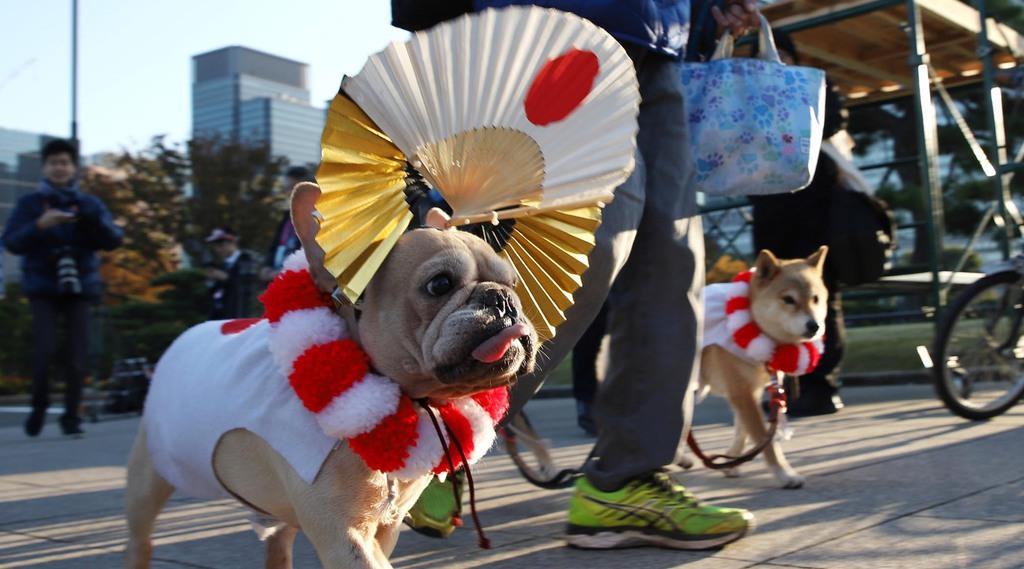 散歩の犬も奉祝ムードに=10日午前、東京都千代田区(大西正純撮影)