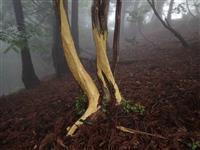 守れ原生林 シカVS植物学者、勝負の行方は?