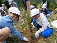 ウバメガシ大きく育て 洲本で漁業関係者や児童ら苗木植樹
