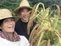 大嘗祭の特産品に沖縄在来の粟復活 女優の吉本多香美さん