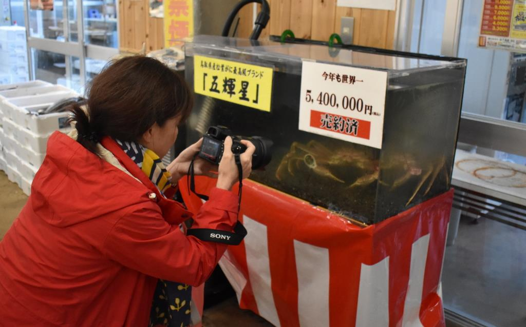 カニはどこへ2(展示中の500万円のカニ)