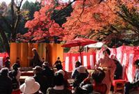 土佐楓、真っ赤に 大田原・御殿山公園