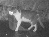人里のネコ、希少種を捕食 徳之島調査「室内飼育を」
