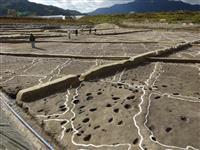 【動画】弥生時代最大の水田跡、奈良で出土 「10万平方メートル以上にも」