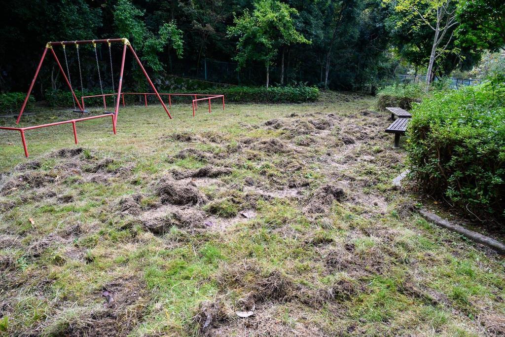 イノシシによって無残に掘り返された芝生=奈良県生駒市のさつき台第5公園