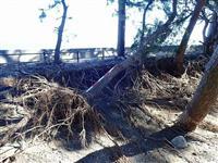 台風被害復旧に17・7億円 静岡県補正案、ラグビーW杯記念碑も