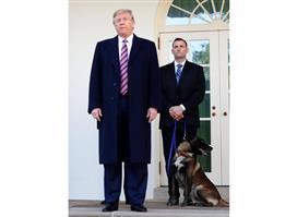 トランプ氏、IS指導者急襲作戦で活躍の軍用犬「コナン」に勲章