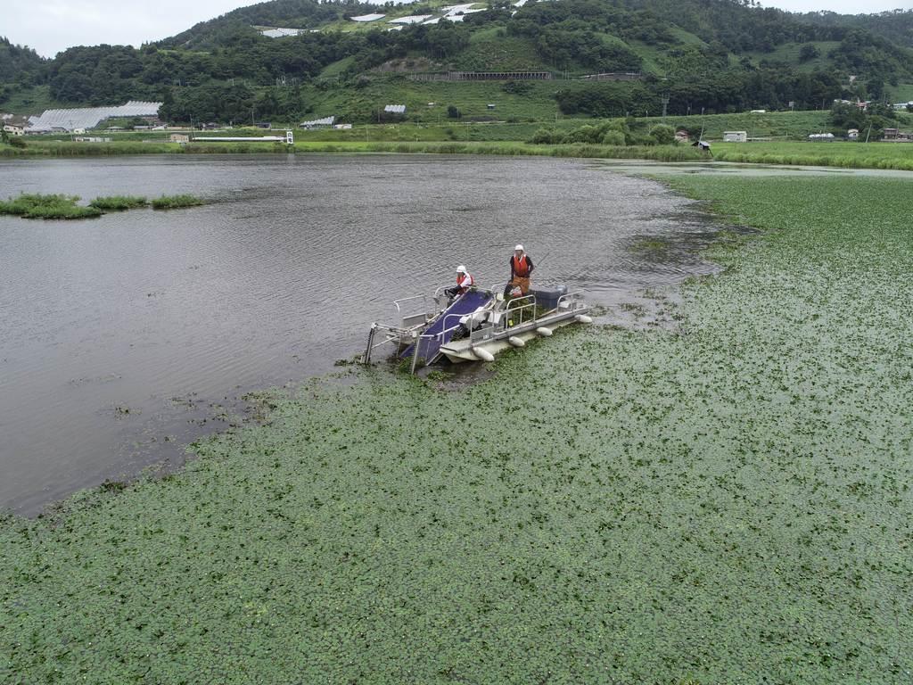 今年8月に行われた白竜湖でのヒシの除去作業。採取された約5200キロのうち、約9割が肥料化された(山形県南陽市提供)