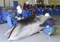 参院農水委、調査捕鯨法改正案の提出決定