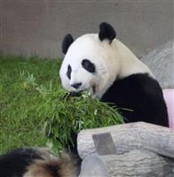 双子パンダ誕生日、5歳に 和歌山のレジャー施設