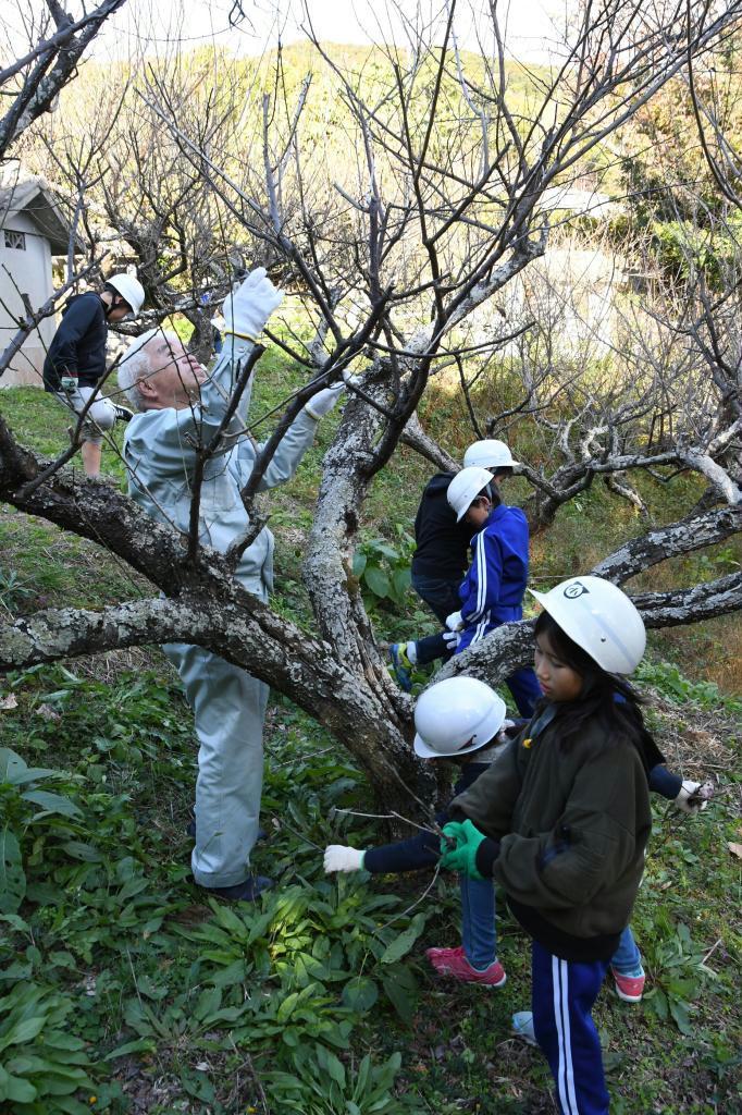 高齢者が剪定した梅の枝を拾い集める児童ら=南あわじ市