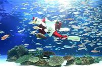 水中からメリークリスマス