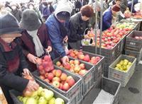 リンゴ詰め放題に300人行列 江刺りんごまつり