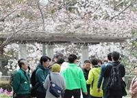 【写真で振り返る2019】(2)大阪ダブル選 桜の下 託された期待の行方は
