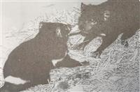 【動物園日記】天王寺動物園が日本初、タスマニアデビル飼育