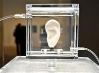ゴッホの左耳「バイオ」で再現 森美術館で展示